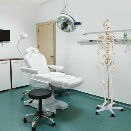 70.8'' Life-size Skeleton Model Medical School Human Anatomy Class W/Rolling Stand - image 8 of 10