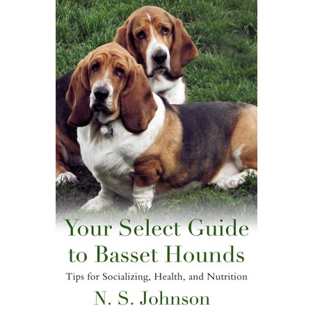Your Select Guide to Basset Hounds. Tips for Socializing, Health, and Nutrition - (Best Age To Neuter A Basset Hound)
