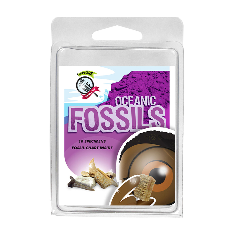 EXPLORE WITH ME OCEANIC FOSSILS