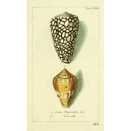 Naturgeschichte des Thierreichs 1780 Shells Conus Canvas Art - Daniel Sotzmann (18 x 24)