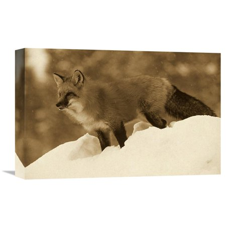 Global Gallery Red Fox Standing At The Top Of A Snow Bank Montana   Sepia Wall Art