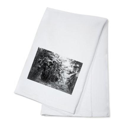 Man Standing in Grove of Banana Trees Photograph (100% Cotton Kitchen Towel)