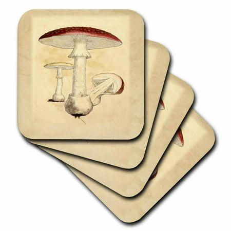 3dRose Image Of Red Vintage Mushroom From Old Botany Book, Ceramic Tile Coasters, set of -