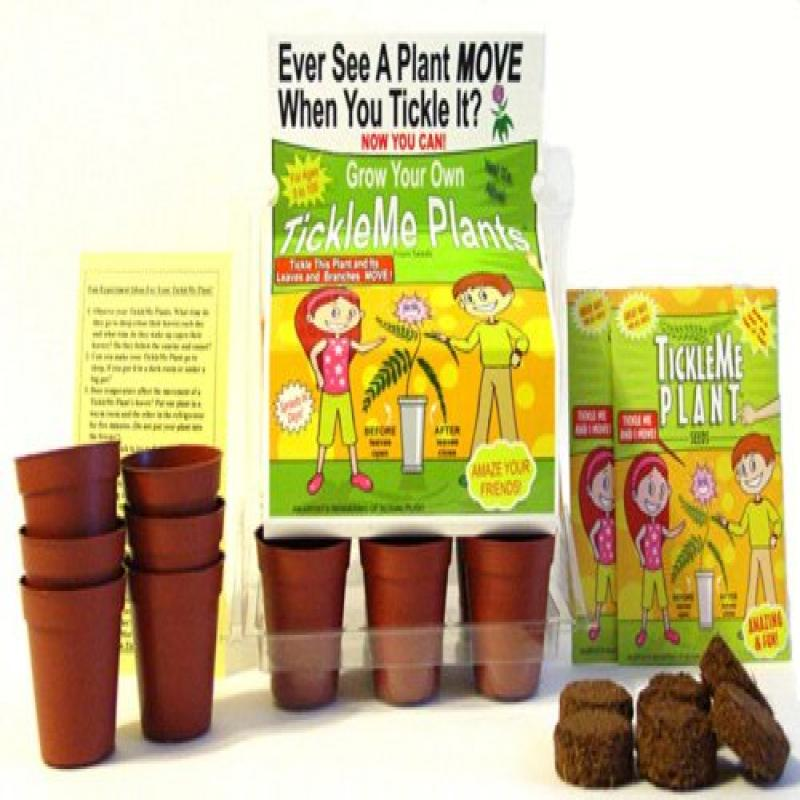 "TickleMe Plant Greenhouse garden kit with science activity card to"" Grow the only House Plant that closes its leaves and lowers it branches when you Tickle It) Great Unique Holiday Gift Idea!"