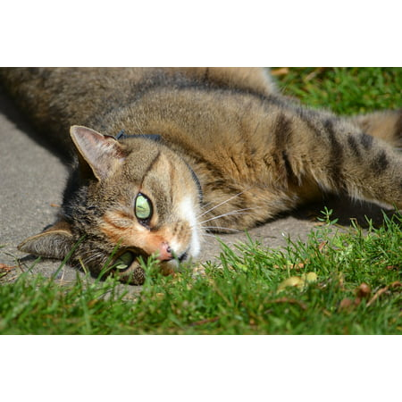 Canvas Print Pet Grass Cute in The Grass Cat Beast Stretched Canvas 10 x