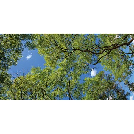 Fluorescent Decorative Ceiling Light Covers - 2ft x 4ft film - Forest Canopy