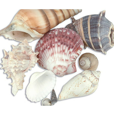 Sea Shell Mixes, Natural Beach Inspired Sea Shell