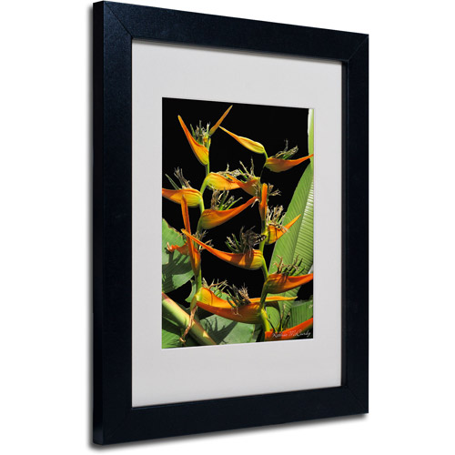 Trademark Art 'Tropical Paradise' Matted Framed Art by Kathie McCurdy
