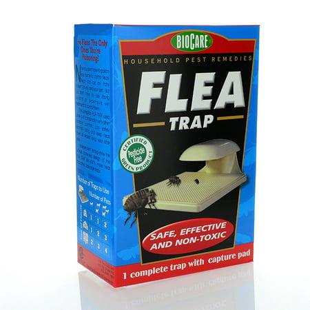 Flea Trap