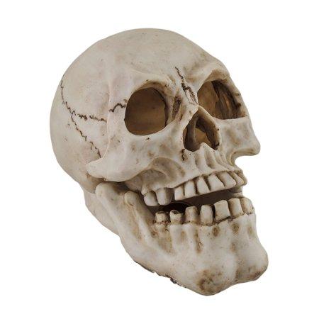 Human Skull Shaped Incense Burner Box