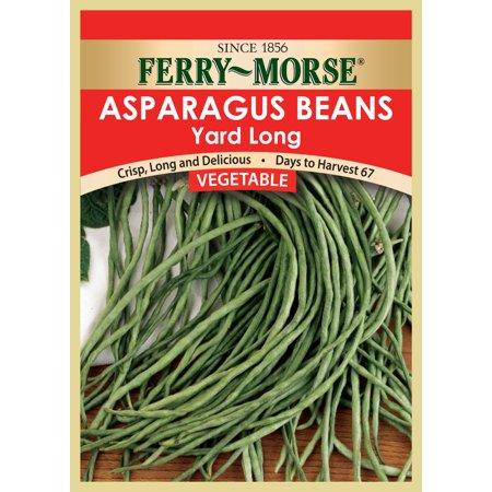 Vegetable seed BEAN - YARD LONG - POLE