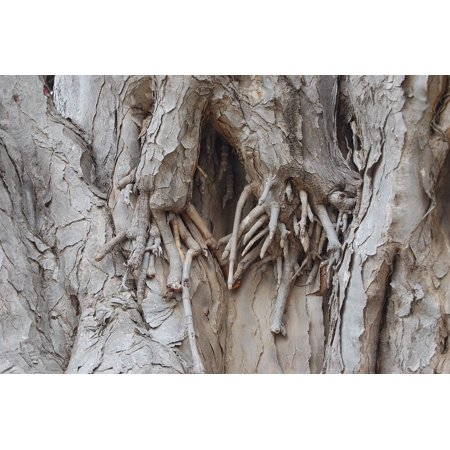 Framed Art For Your Wall Overgrown Wood Bark Nature Tree