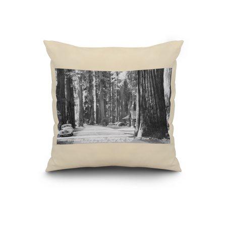 Richardson Grove State Park Redwoods, CA Photograph (20x20 Spun Polyester Pillow, White Border)