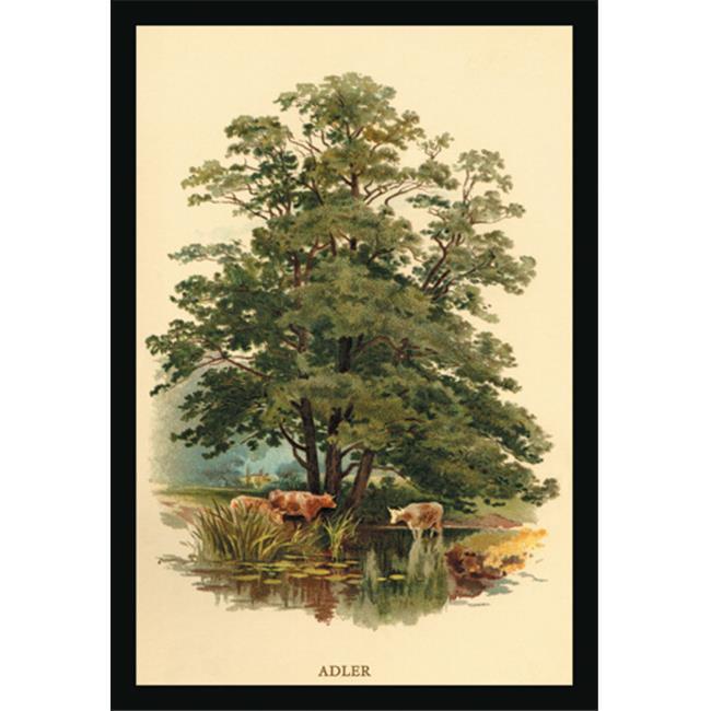 Buy Enlarge 0-587-17615-6P12x18 Alder Tree- Paper Size P12x18
