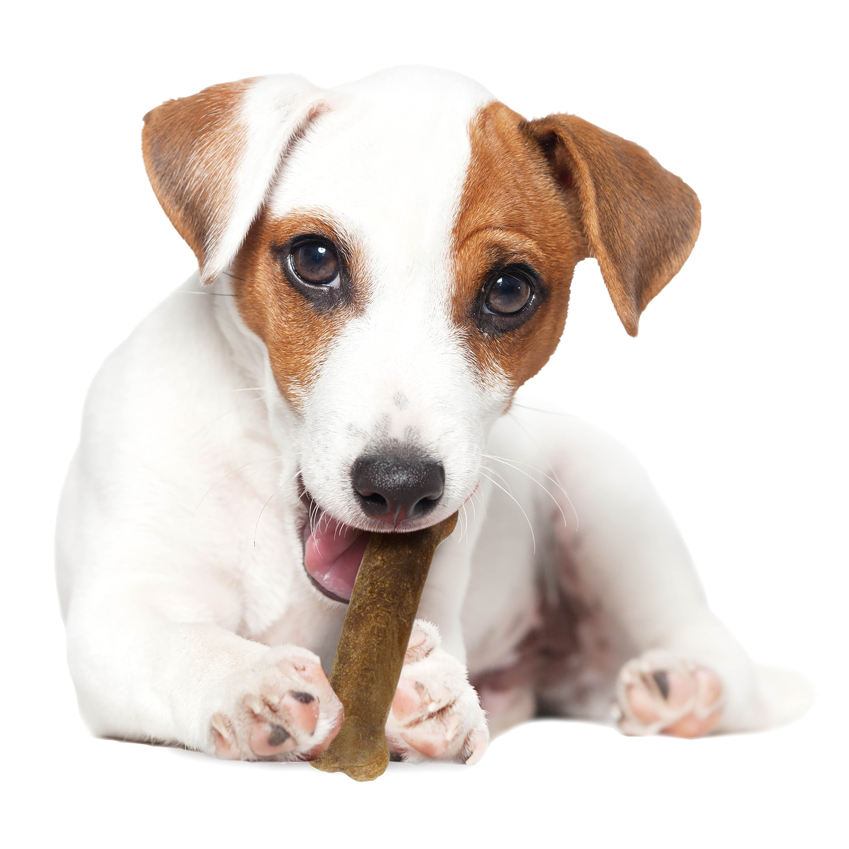 Nylabone Healthy Edibles Natural Chicken Flavored Dog Treats, Triple Pack, Regular