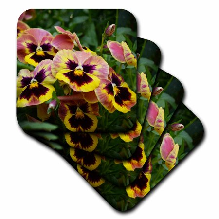 3dRose Beautiful bed of pansy flowers is a photo of autumn colored pansies - Soft Coasters, set of 4 (Pansy Coasters)