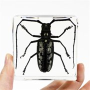 Ed Speldy East Company PW401 Real Bug Longhorned Beetle Paperweight