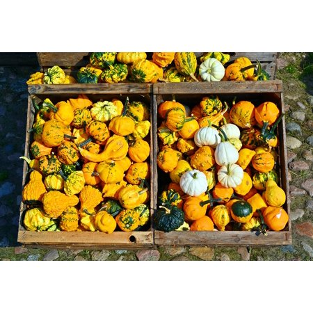 LAMINATED POSTER Decoration Harvest Time Pumpkin Benefit From Sale Poster Print 24 x 36 for $<!---->
