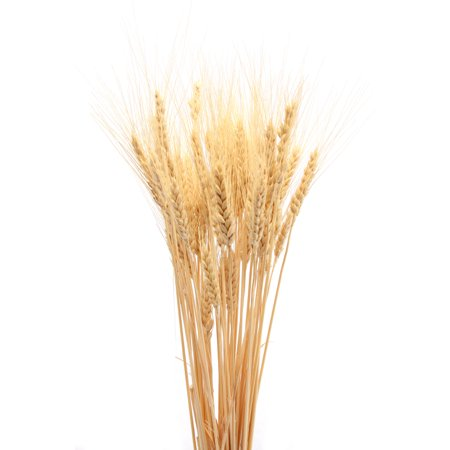 Dried Wheat Bunch - 8 oz blond 40-60 pieces Decorative Wheat -- Long stem single