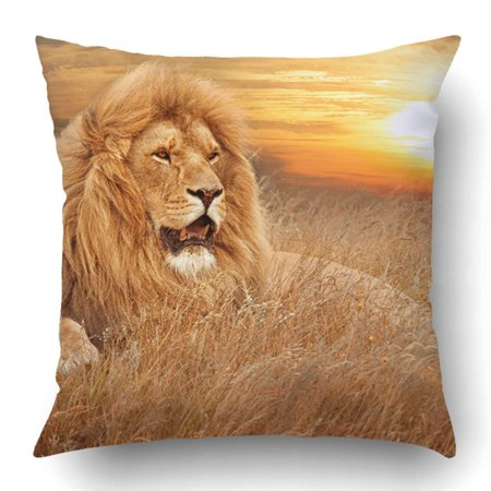 BSDHOME Picture Of Lions In Grass Pillowcase Pillow Cushion Cover 16x16 inch - image 1 de 1