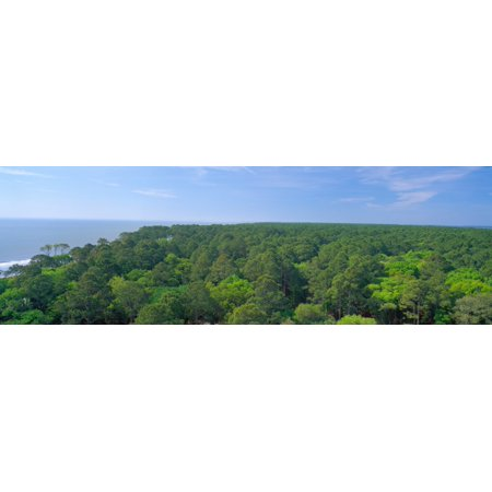 Native trees at Hunter Island near Hilton Head South Carolina Poster