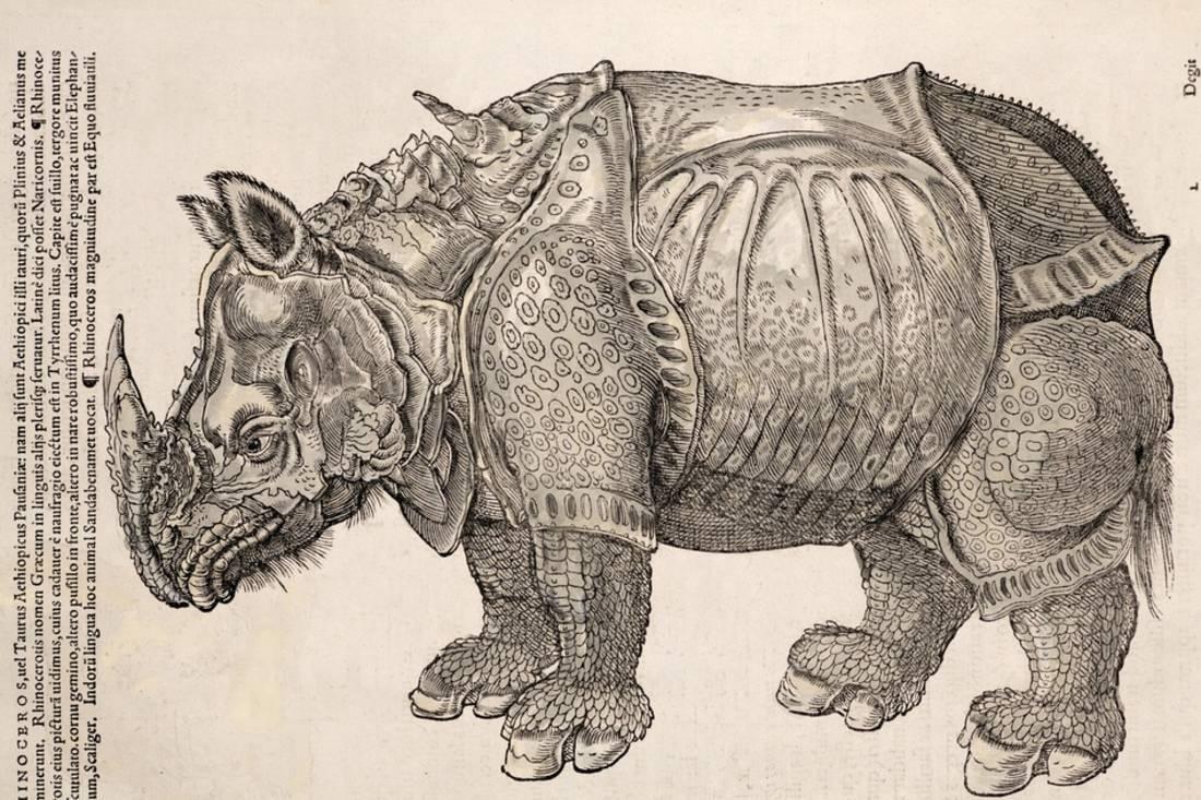 1551 Gesner Armoured Rhino After Durer Print Wall Art By Paul Stewart