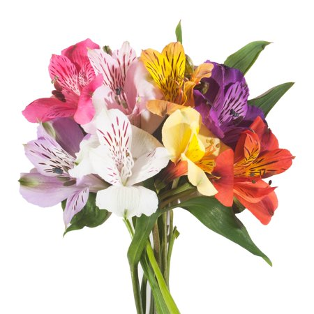 Natural Fresh Flowers - Assorted Alstroemeria, 150 (Alstroemeria Flowers)