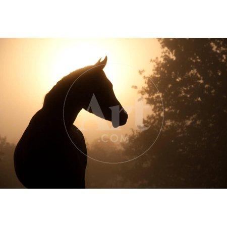 Arabian Horse Paintings - Silhouette Of A Beautiful Arabian Horse Against Sun Shining Through Heavy Fog, In Sepia Tone Print Wall Art By Sari ONeal
