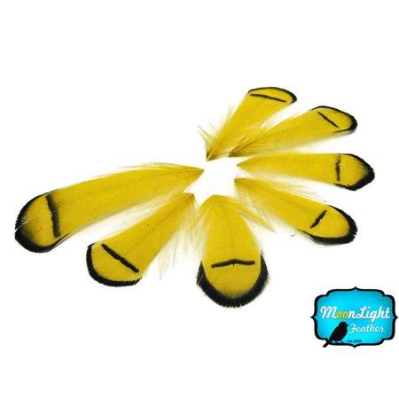 1 Dozen - Yellow Lady Amherst Pheasant Tippet Feathers