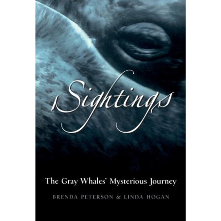 Sightings  The Gray Whales Mysterious Journey