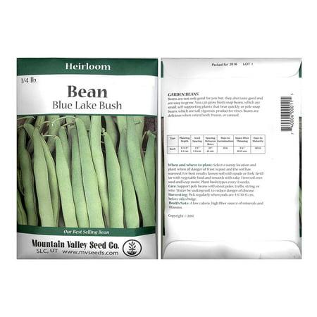 Blue Lake Bush Bean 274 Seeds - 4 Oz - Non-GMO, Heirloom, Open Pollinated - Vegetable Garden Seeds - Green String