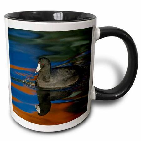 3dRose USA, California, Glorietta Bay. American coot duck - US05 BJA0112 - Jaynes Gallery - Two Tone Black Mug, 11-ounce