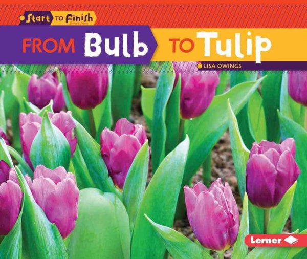 tulipe walmart