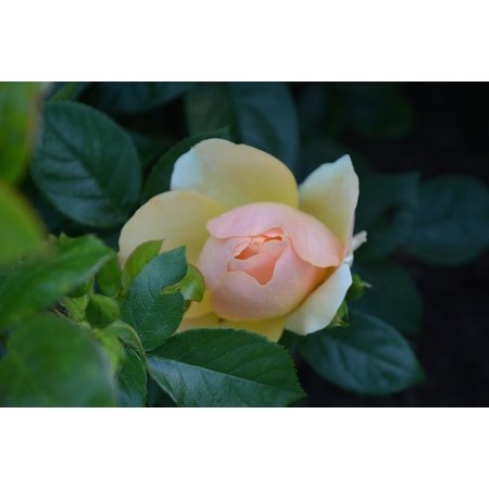 LAMINATED POSTER Nature City Park Flower Rose Summer Blossom Bloom Poster Print 24 x 36](Bloons City)
