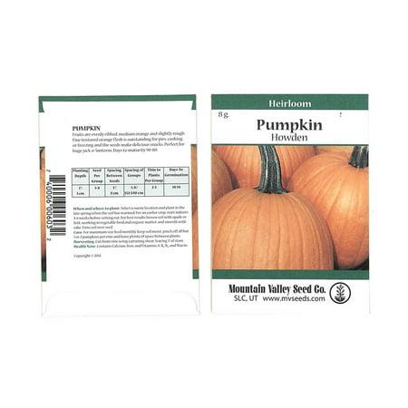 Pumpkin Garden Seeds - Howden Variety - 3 Gram Packet - Non-GMO, Heirloom Pumpkins - Rich Orange - Jack O'Lantern Pumpkin Gardening