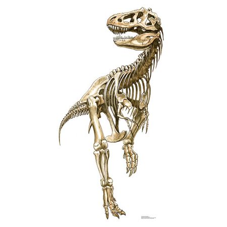 Advanced Graphics 2071 Tyrannosaurus Rex Skeleton - 76