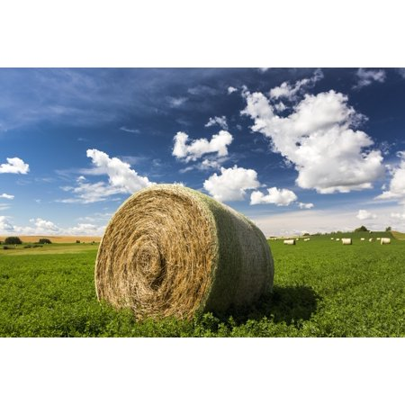 Close up of large round hay bale in an alfalfa field with clouds and blue sky Acme Alberta Canada Canvas Art - Michael Interisano  Design Pics (19 x 12) ()