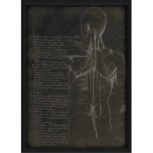 The Artwork Factory Anatomy Torso Back Framed Graphic Art by Blueprint Artwork
