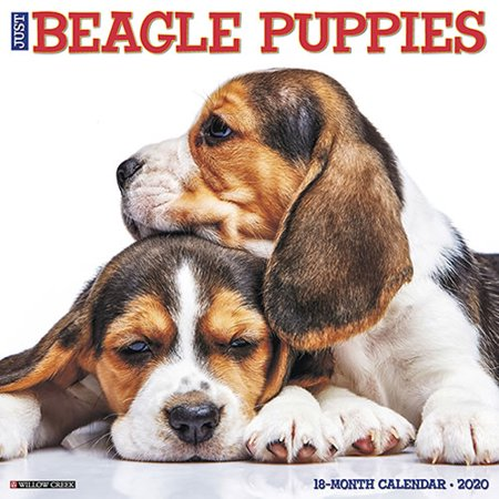 Willow Creek Press 2020 Just Beagle Puppies Wall Calendar Puppies Wall Calendar