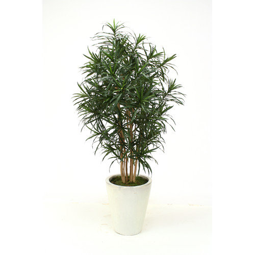 Distinctive Designs Dracaena Reflexa Anita Tree in Planter