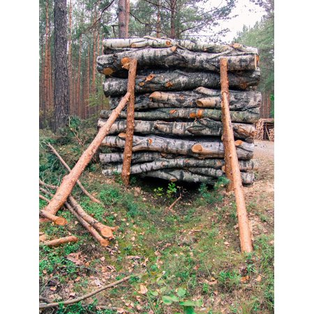 Canvas Print Supported Slice Cut Pine Wood Tree Stack Stretched Canvas 10 x - Support Stack