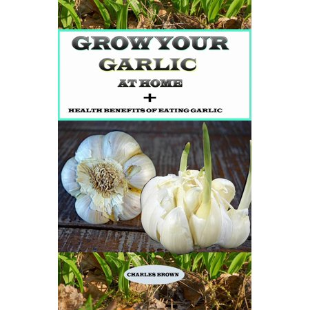 Grow your Garlic at Home + Health Benefits of Eating Garlic -