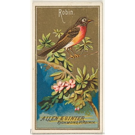 Robin from the Birds of America series (N4) for Allen & Ginter Cigarettes Brands Poster Print (18 x 24)