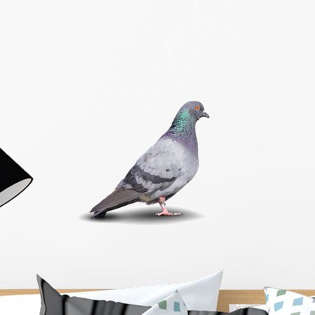 Pigeon Wall Decal by Wallmonkeys Peel and Stick Graphic 18 in W x 14 i