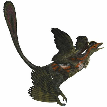 StockTrek Images PSTCFR200144P The Microraptor Was A Small Flying Dinosaur with Four Wings in The Cretaceous Period of China Poster Print, 14 x 14 - image 1 of 1
