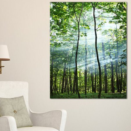 Act Green - Design Art 'Green Sunny Forest' Photographic Print on Wrapped Canvas