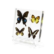 Ed Speldy East Company BF421 Real Bug Real Bug Butterfly Desk Decoration, 4 Piece