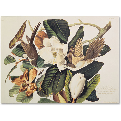 "Trademark Fine Art ""Black-Billed Cuckoo"" Canvas Art by John James Audubon"