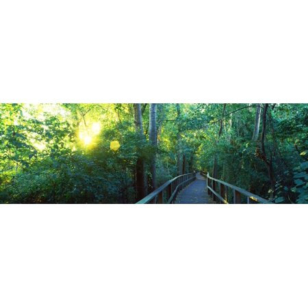 Boardwalk In A Forest Crane State Park Ohio Usa Canvas Art   Panoramic Images  36 X 12