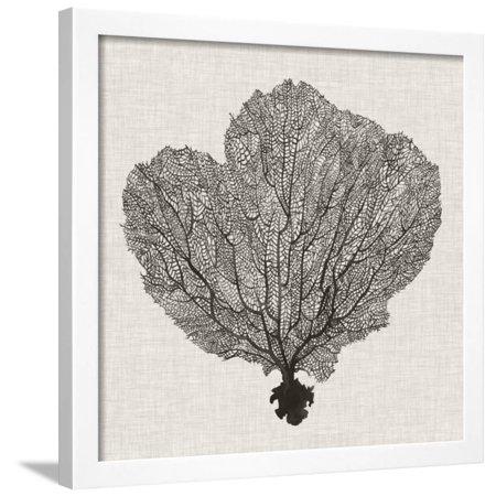 - Shadow Sea Fan I Framed Print Wall Art By Grace Popp